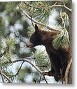 Cub In Tree Metal Print