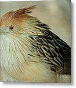 Cuckoo Bird Metal Print