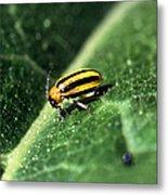 Cucumber Beetle Metal Print