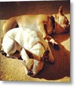 Cuddle Buddies <3 Kirby & Lola Metal Print by Nena Alvarez