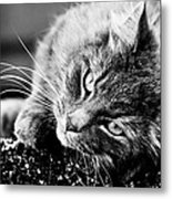 Cuddly Cat Metal Print