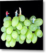 Cultivation On Grapes Metal Print by Paul Ge