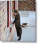 Curiosity Inspirational Cat Photograph Metal Print