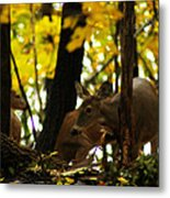 Curious Doe Metal Print by Scott Hovind