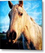 Curious Horse Metal Print