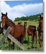 Curious Horses In Summer Metal Print