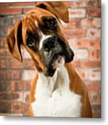 Cute Dog Metal Print by Danny Beattie Photography