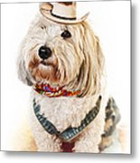 Cute Dog In Halloween Cowboy Costume Metal Print by Elena Elisseeva
