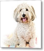 Cute Dog Portrait Metal Print