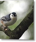 Cute Face Nuthatch Metal Print