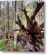 Cypress Roots Metal Print