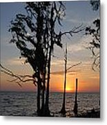 Cypress Sunset Metal Print