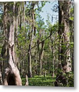 Cypress Trees And Water Hyacinth In Lake Martin Metal Print