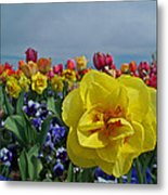 Daffodil Up Front Metal Print