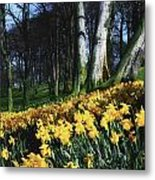 Daffodils Narcissus Flowers In A Forest Metal Print