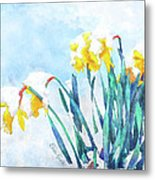 Daffodils With Bad Timing Metal Print by Suni Roveto
