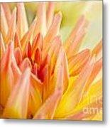 Dahlia Flower 06 Metal Print