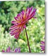 Dahlia Flower Art Print Green Summer Garden Metal Print
