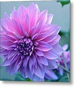 Dahlia Flower2 Metal Print