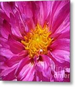 Dahlia Named Pink Bells Metal Print