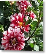 Dahlia Named Yoro Kobi Metal Print