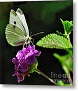 Dainty Butterfly 2 Metal Print