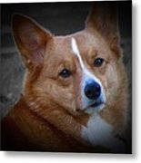 Daisie Our Corgi Metal Print