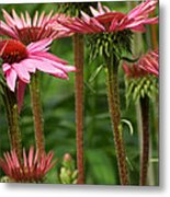 Daisy Forest Metal Print