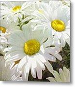 Daisy Summer Garden Metal Print