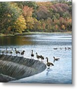 Dam Geese Metal Print