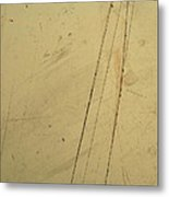 Damaged Surface I Metal Print
