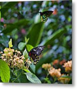 Dance Of The Butterflies Metal Print