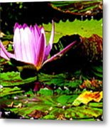 Dancing Pink Water Lilly Metal Print