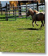 Dancing Pony Metal Print