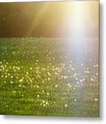 Dandelion And Meadows In Back-light Metal Print
