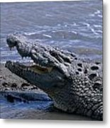 Danger On The Mara River Metal Print