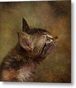 Daphne In Profile Metal Print by Pat Abbott