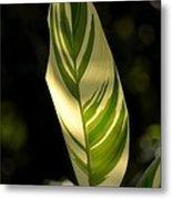 Dappled Ginger Leaf Metal Print