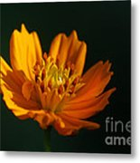 Dappled In The Morning Light Metal Print