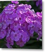 Dappled Light Metal Print