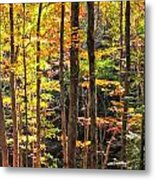 Dappled Sun On Fall Colors Metal Print