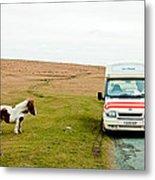 Dartmoor Pony Fancies An Ice Cream Metal Print