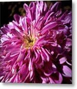 Dawn Flower Metal Print