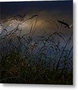 Dawn Light Metal Print