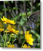 Dawn On Wings Metal Print