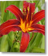 Day Lilly In Diffused Daylight Metal Print