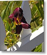 Day Lily And White Fence II Metal Print