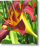 Day Lily Red And Yellow Metal Print