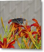 Daylily Butterfly Metal Print
