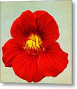 Daylily On Texture Metal Print